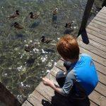 Feeding Ducks From the Dock